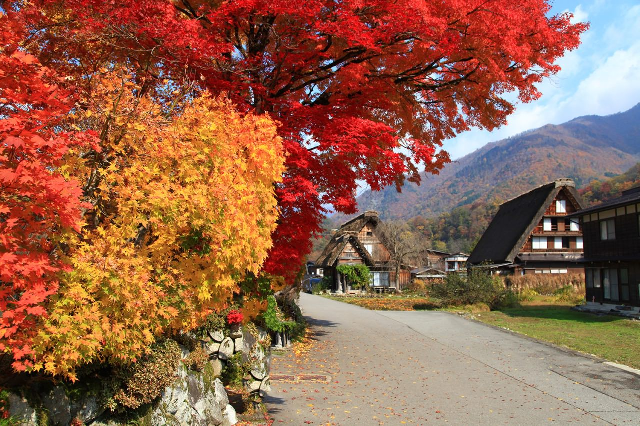 Shirakawa-go is a small village and beautiful colors can be seen from late October to mid November.