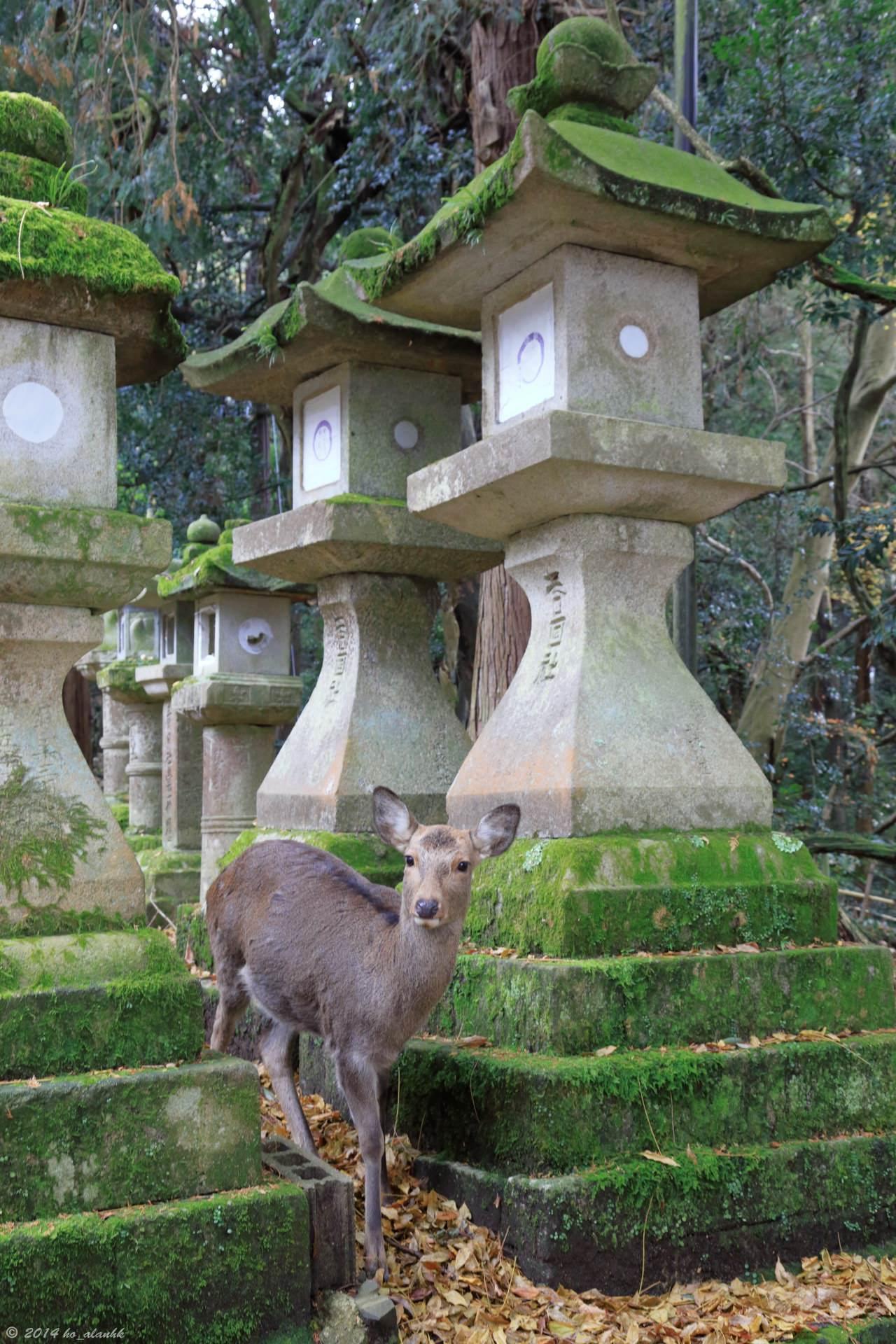 Kasuga Grand Shrine