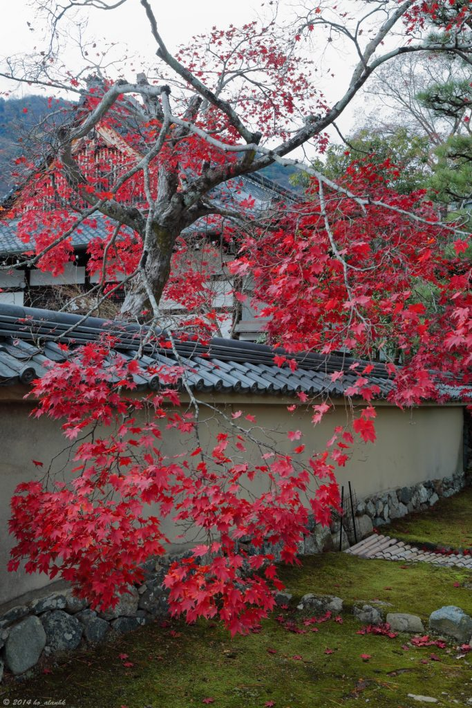 Beautiful red leaves in Tenryu-ji