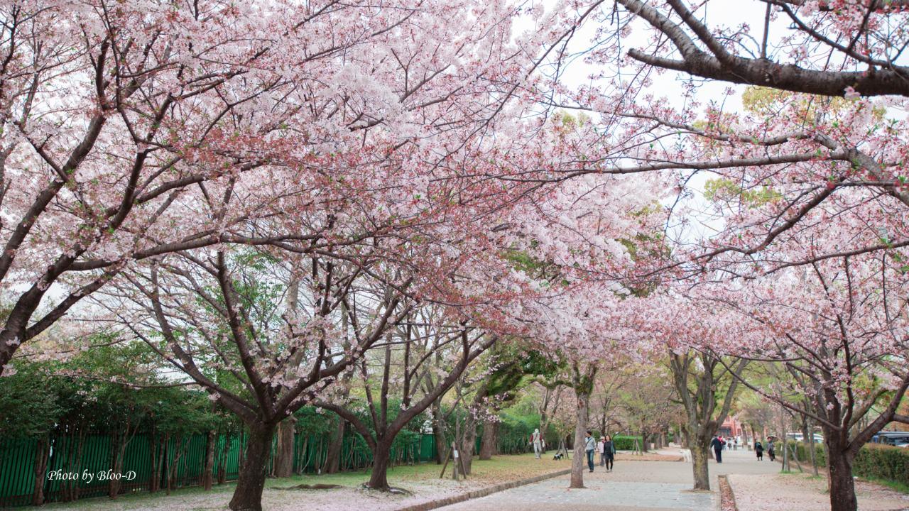Himeji Castle outside
