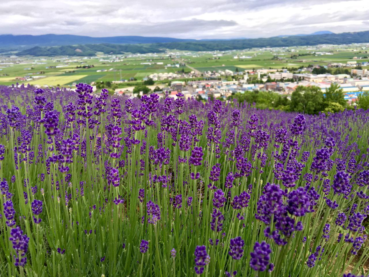 Best view with lavender fields and furano town