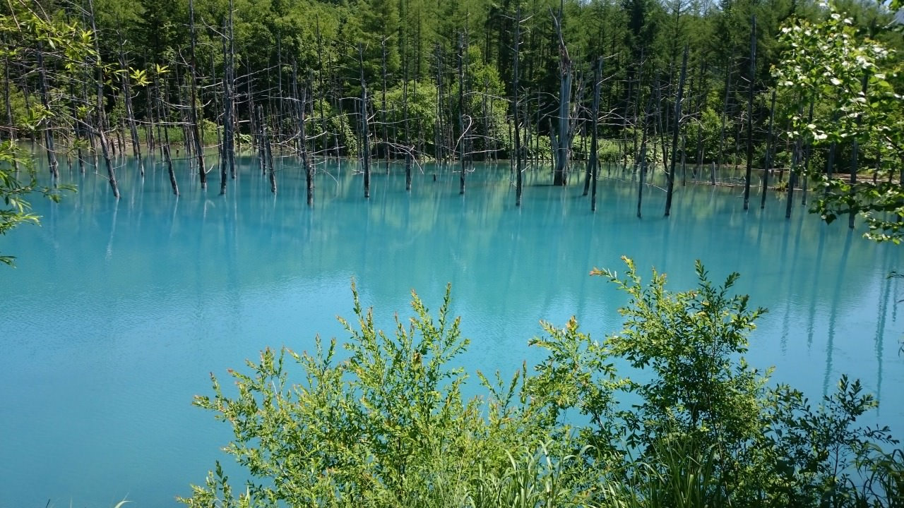 Blue pond@Biei is a must visit for its fascinating natural beauty.