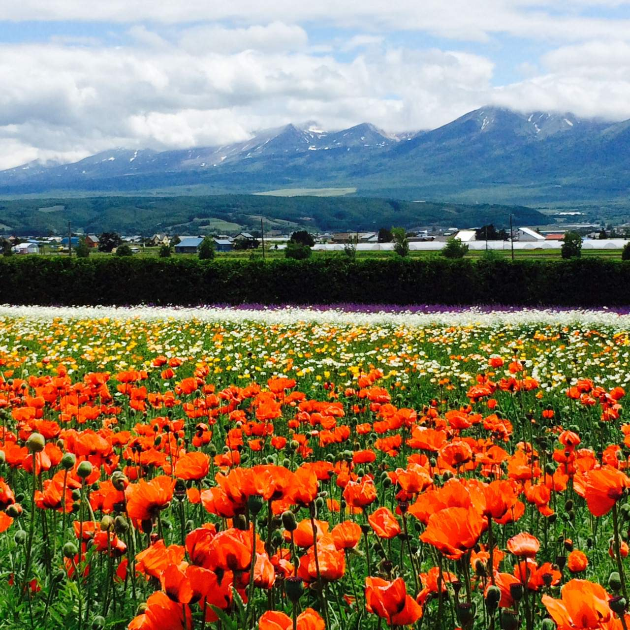 Flower fields surrounded by mountains