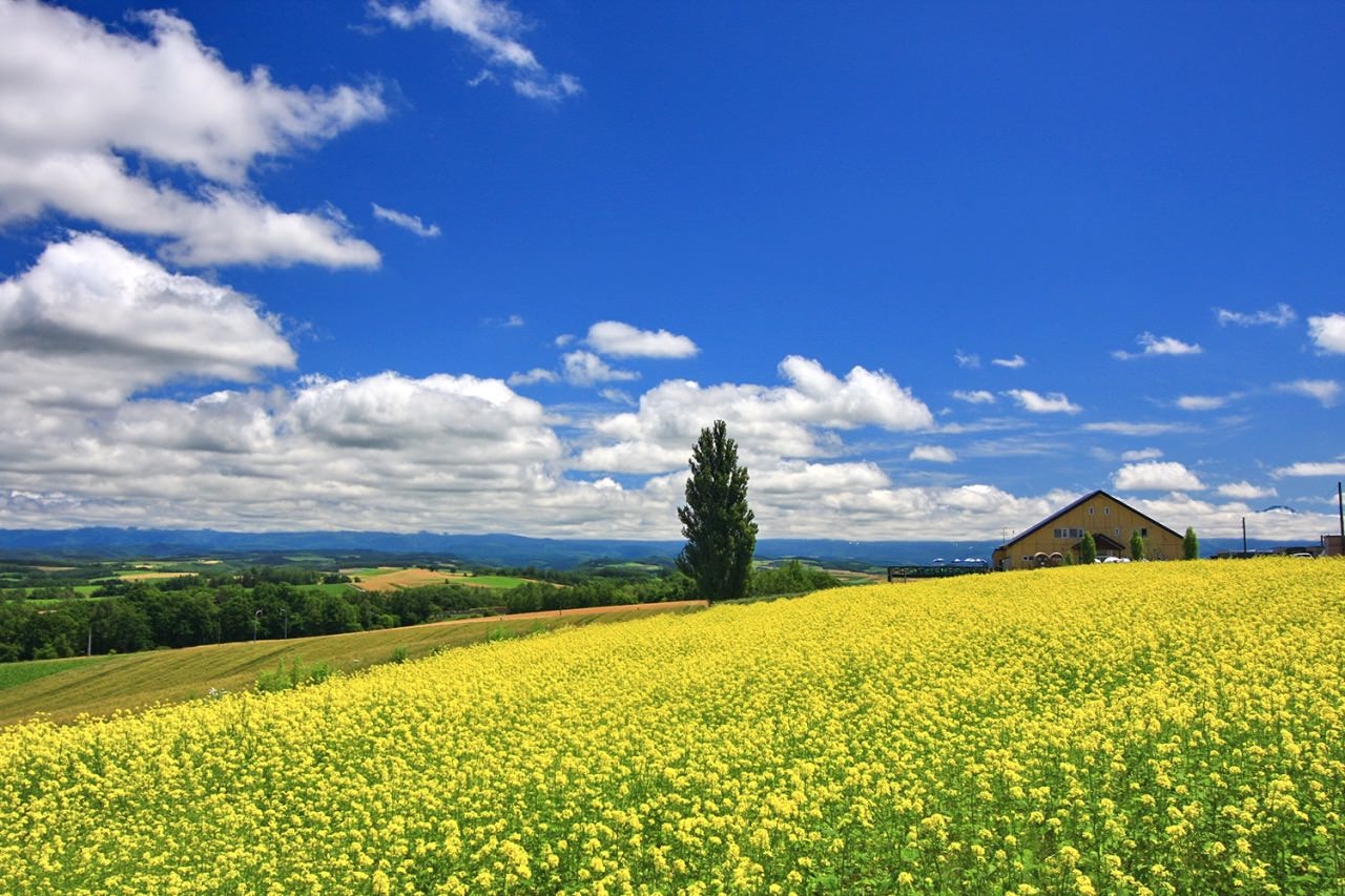 Biei is well-known as a town with many picturesque beautiful hills and beautiful landscape.