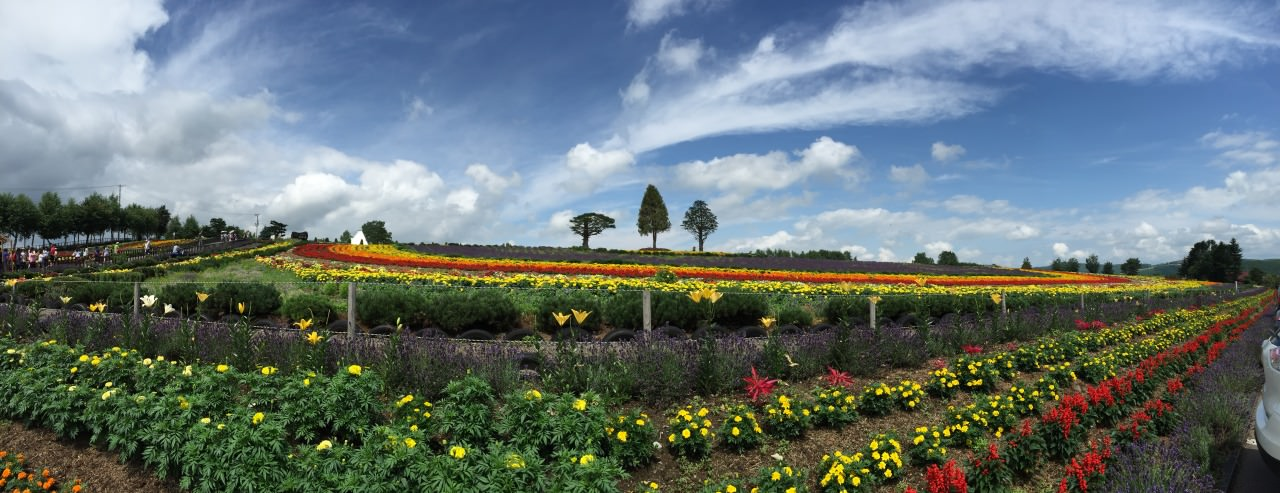 Panorama view , One of my favorite Lavender farm.