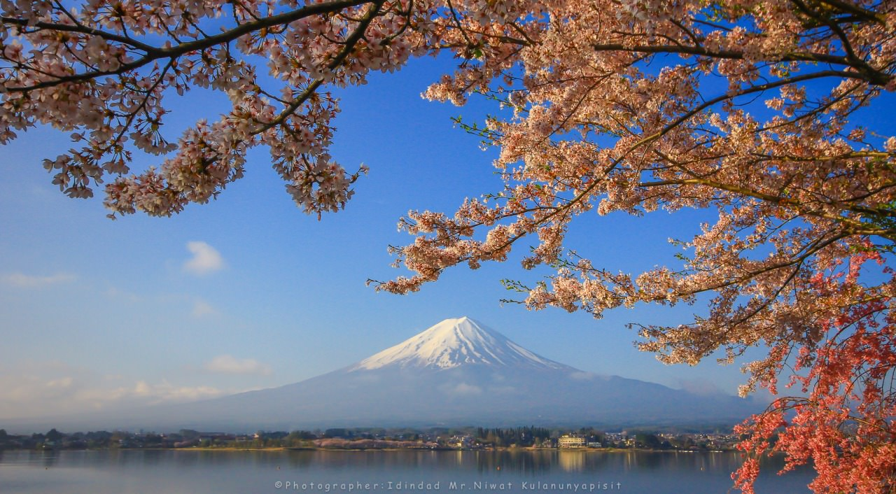 The nice view of Mount Fuji in combination with Lake Kawaguchiko and cherry blossoms.