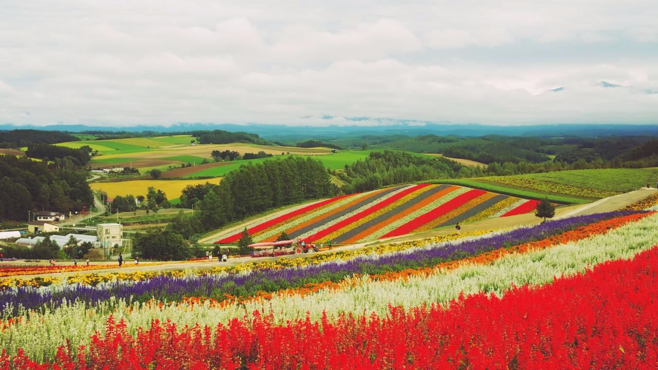 秋天,不一定是单一的红叶,也可以是色彩缤纷的百花。