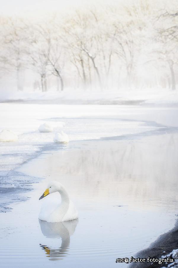Lake Kussharoko