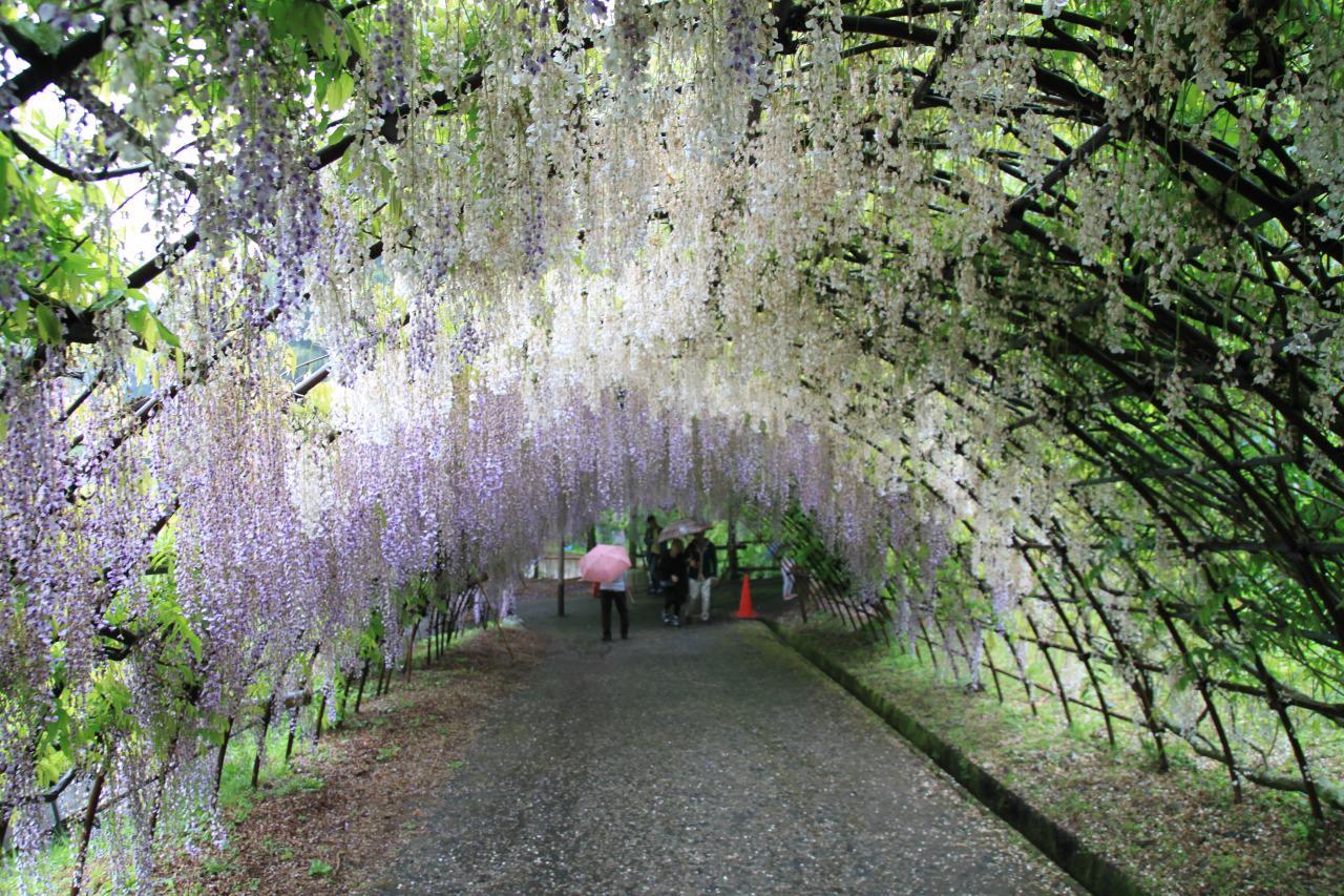 Fuji Garden - Kitakyushu Kawachi
