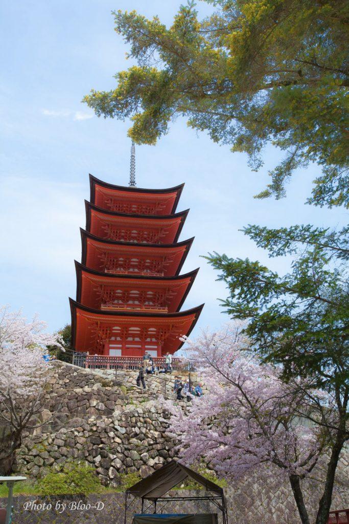 宮島五重塔,紅紅的五重塔,加上盛開的櫻花,美景也。