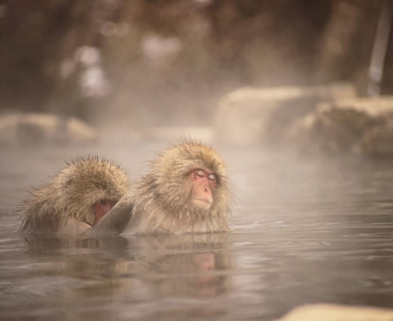 猿猴互相擦背,面上流露出陶醉的表情