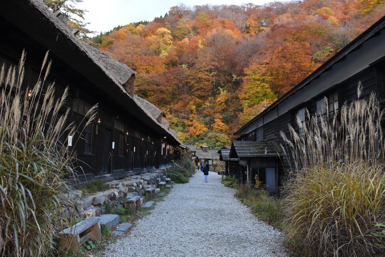 乳頭溫泉鄉中歷史最悠久的溫泉旅館「鶴之湯溫泉」。此旅館已有350多年。秋天的景緻,美得動容。
