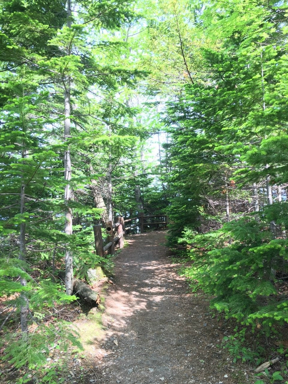 Trekking through the forrest in Furano