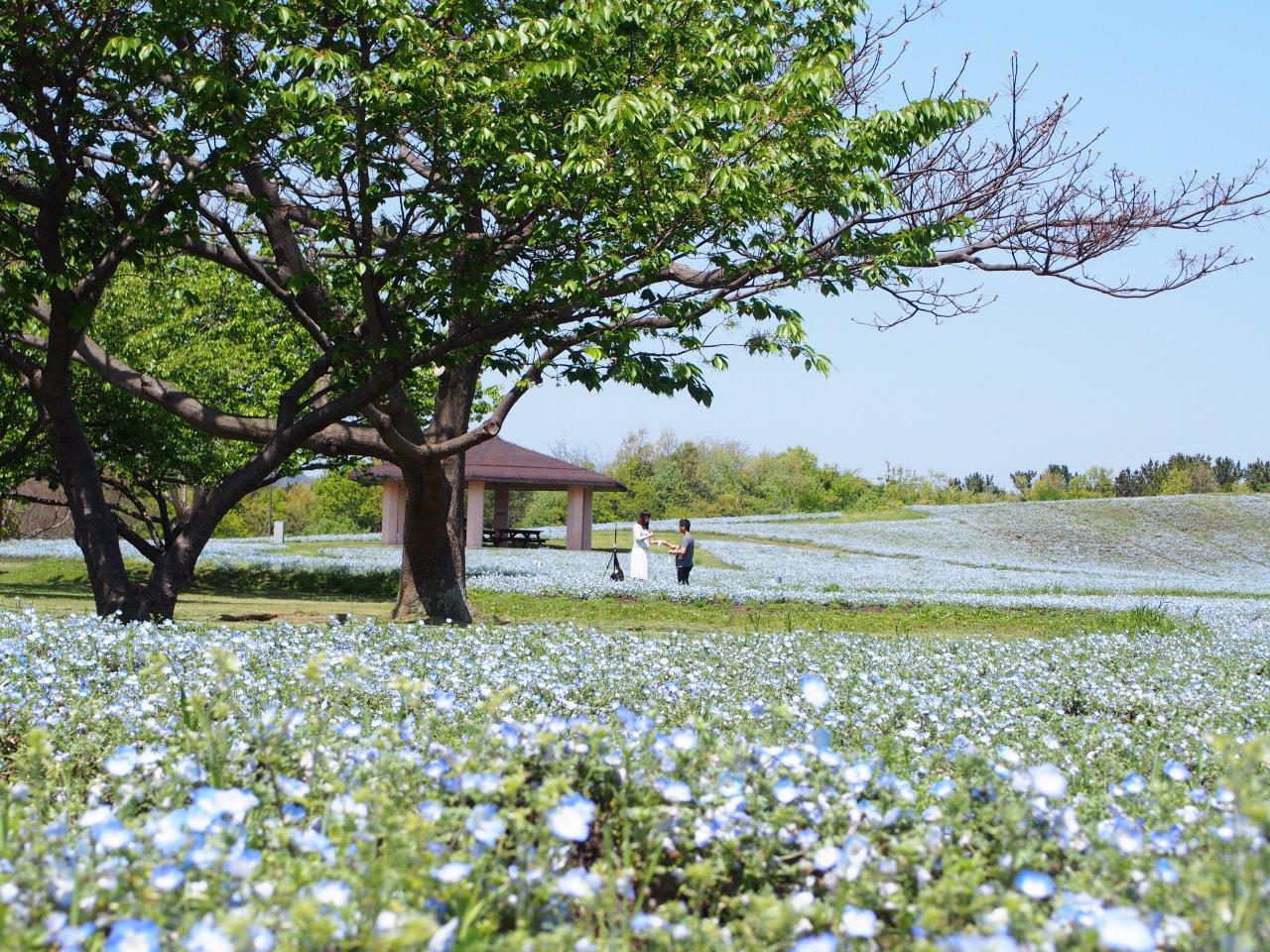 Uminonakamichi Seaside Park