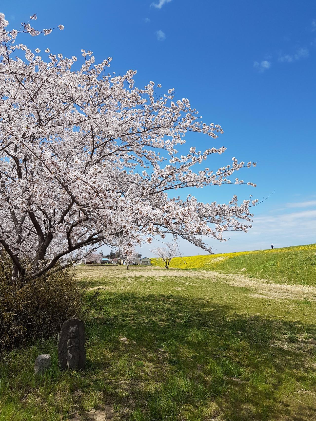Okegawas-shi