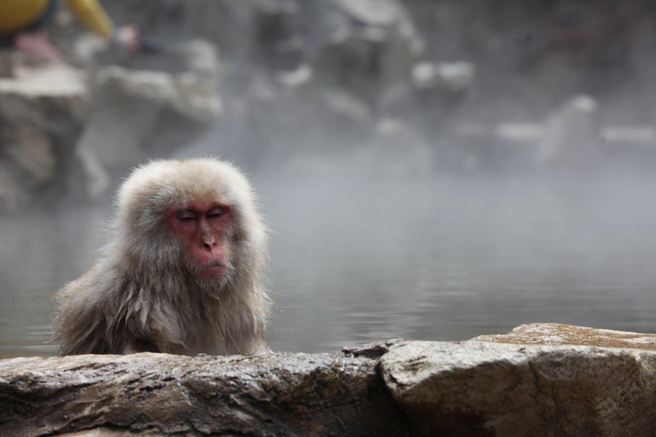 Relaxing Monkey
