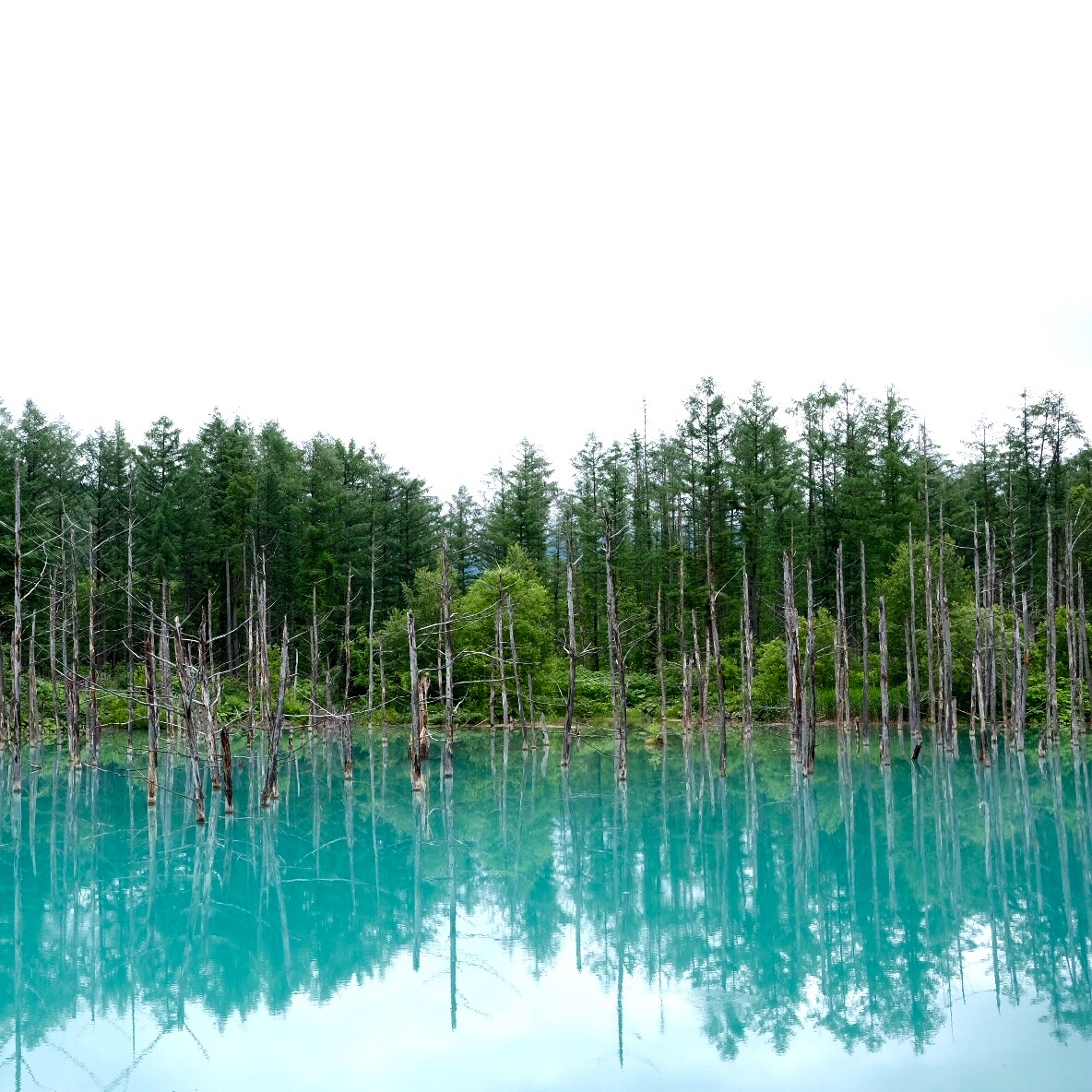 Shirogane Blue Pond
