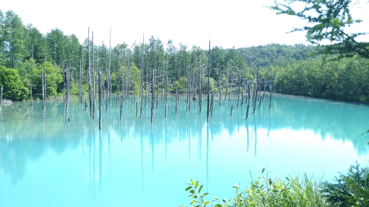 美的像仙境的青池