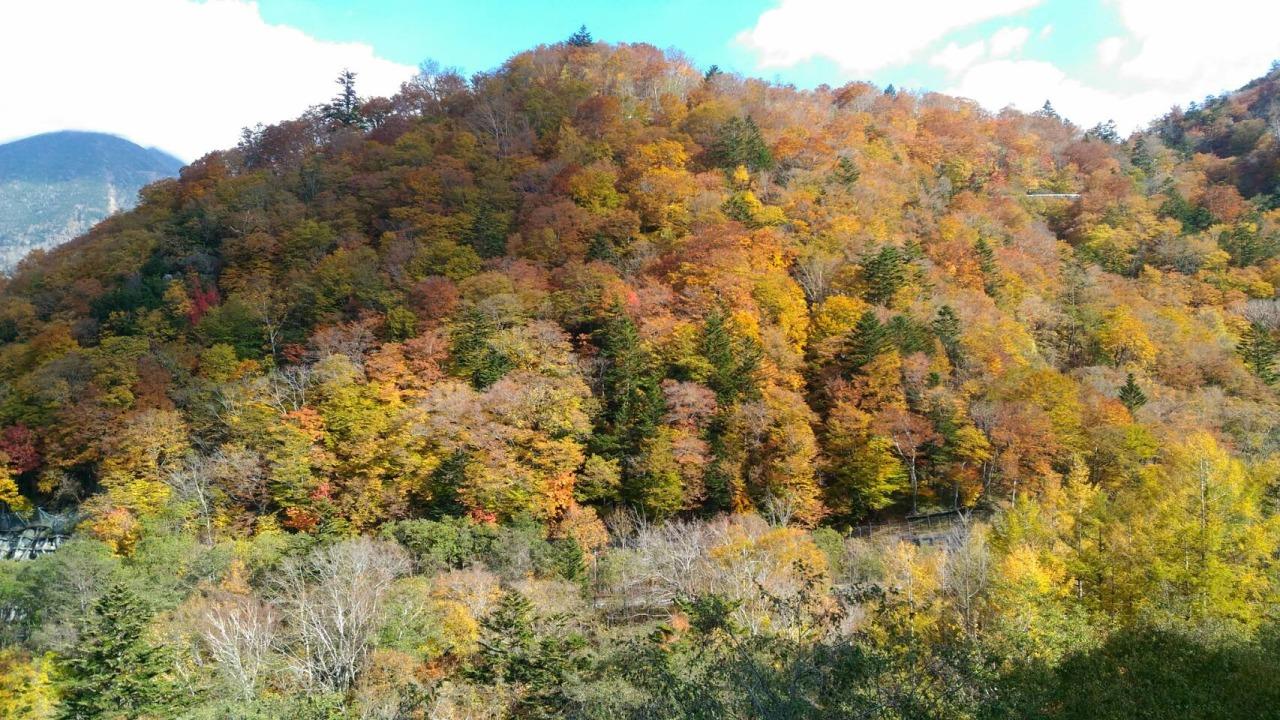 秋天的日光