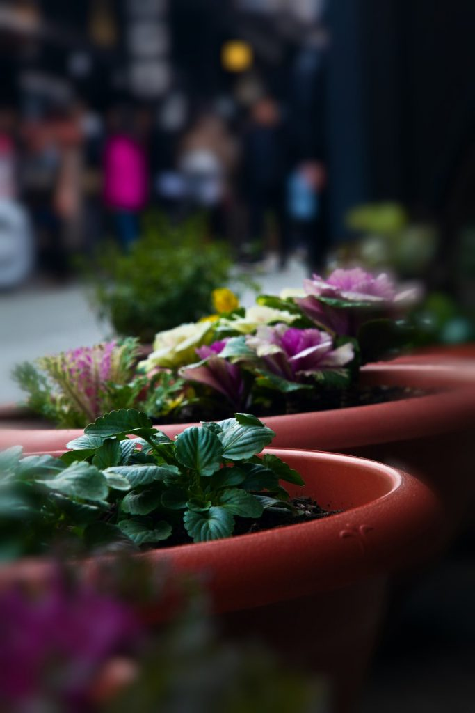 Flower Pots along the Old Street