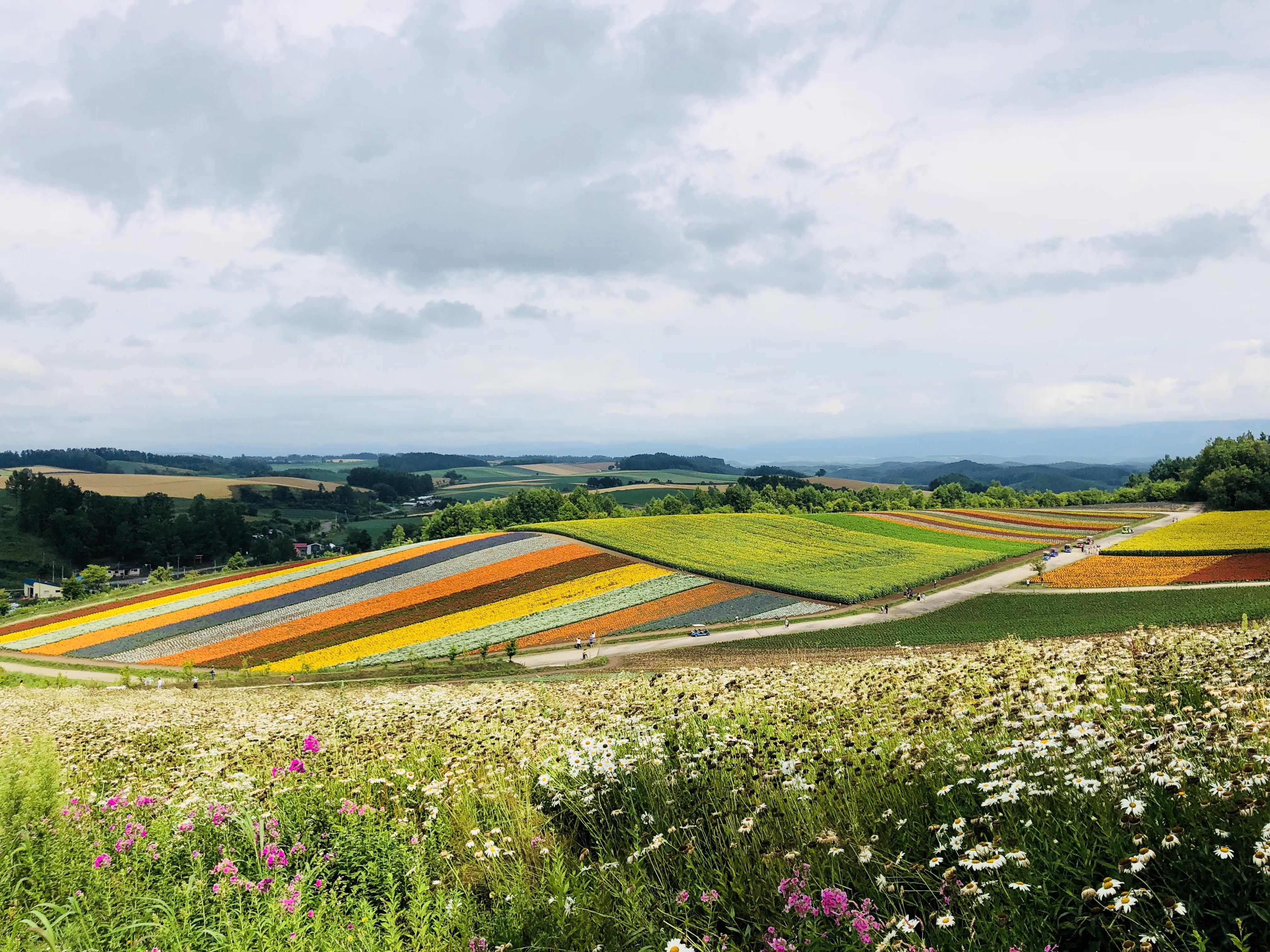 北海道的夏天超美的